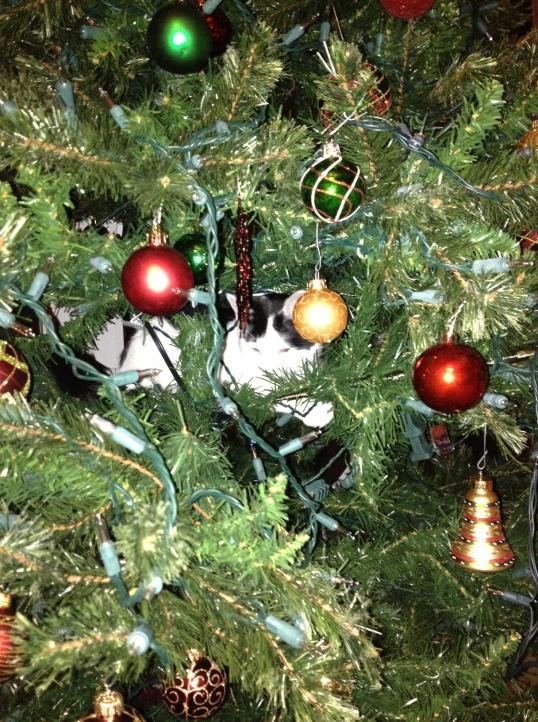 Mo in xmas tree