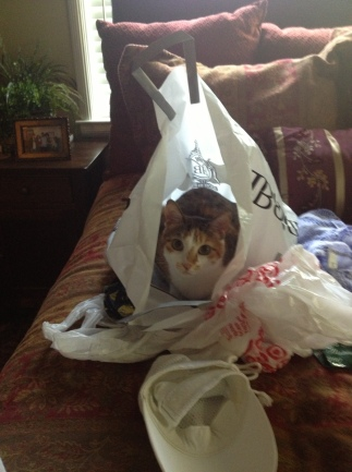 chunk in bag